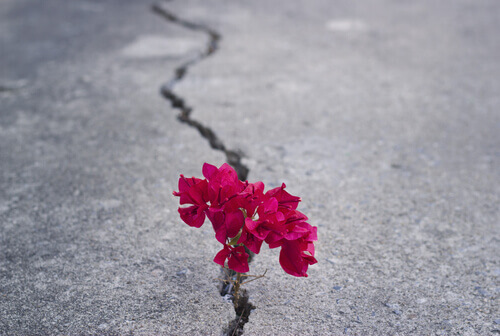 flores-en-una-grita-de-una-carretera-2